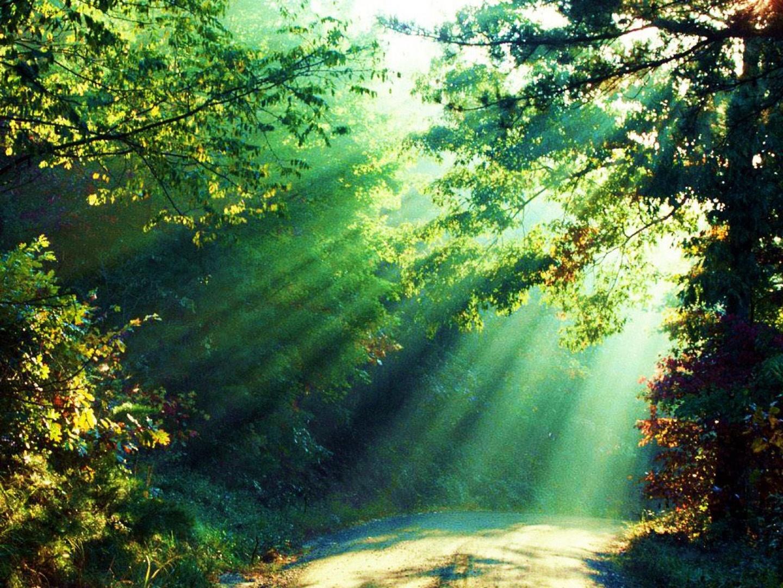 Bosque-iluminado
