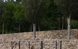 La muralla, o muro en una vida…