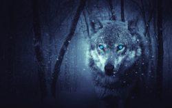 Conciencia  o inconsciencia Existe la leyenda de hombres  y mujeres lobo  también corderos